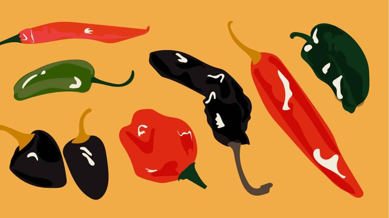 Illustration de piment mexicain