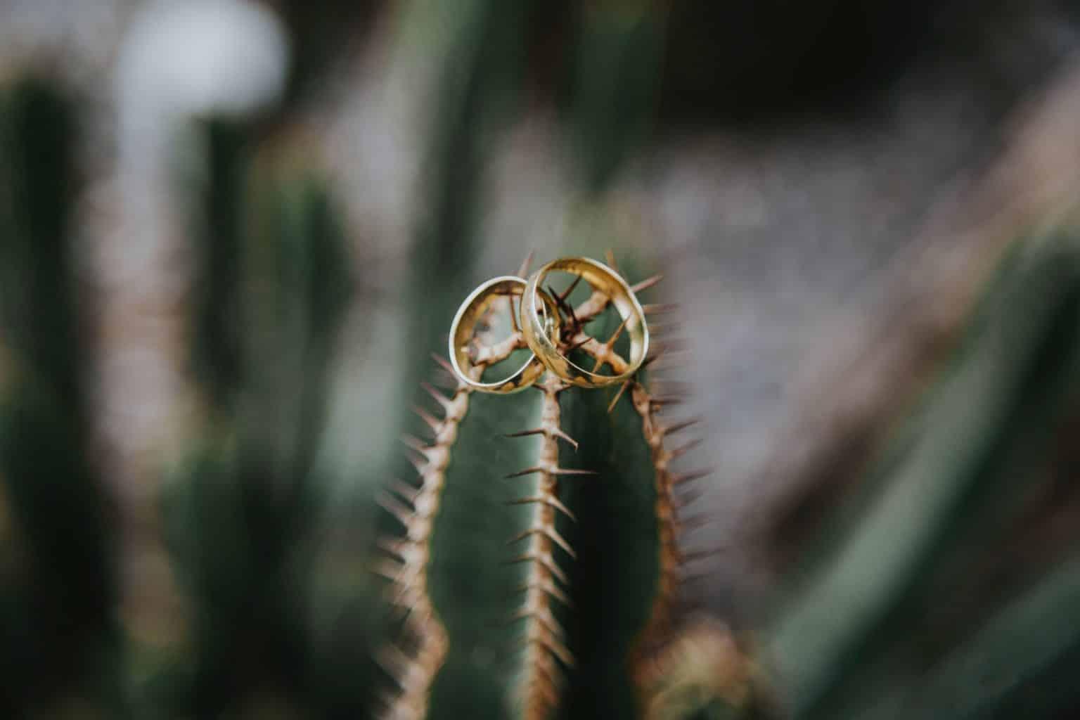 Photographie de deux alliances sur un Cactus