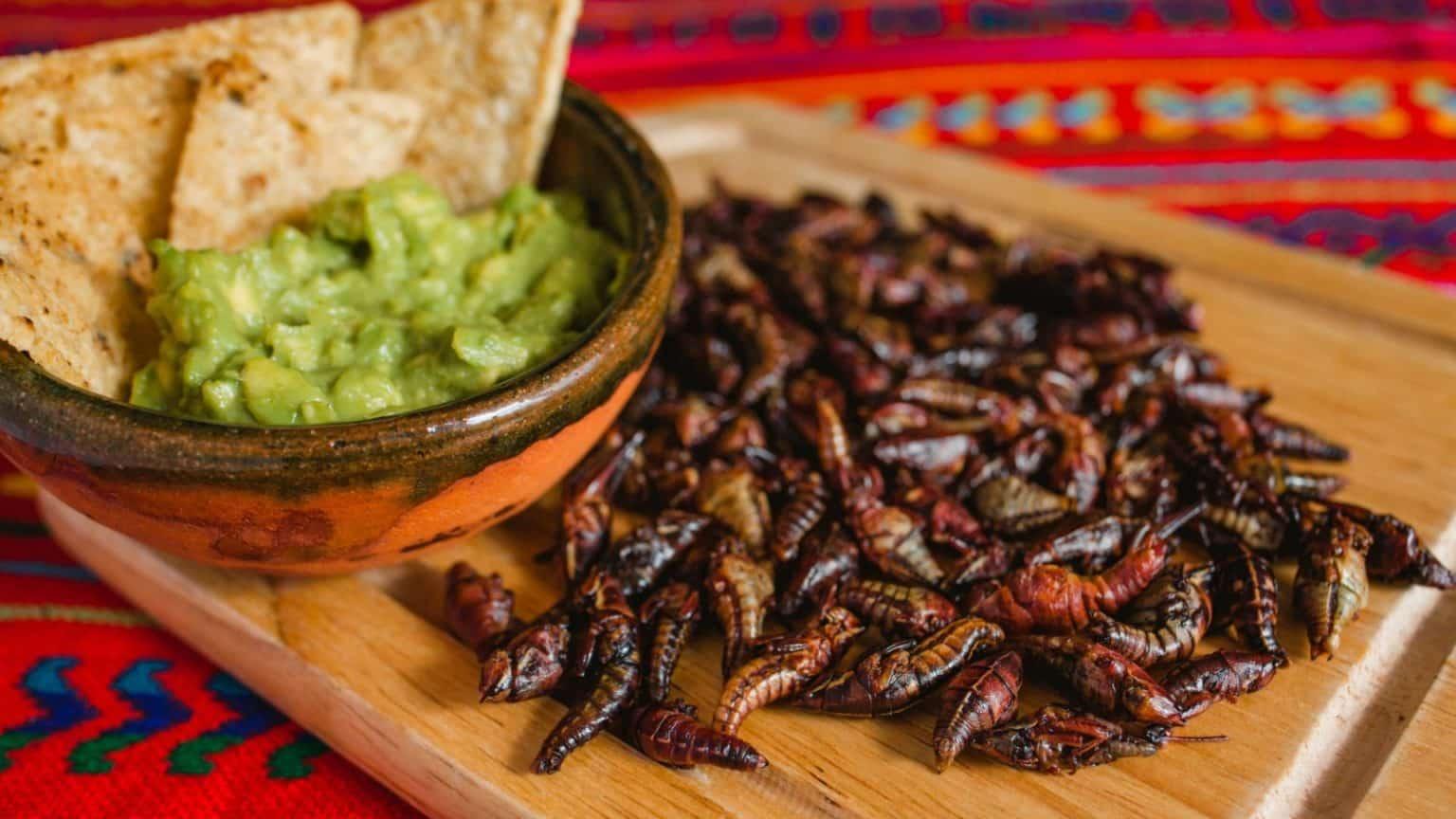 Insecte comestible du Mexique : Chapulines